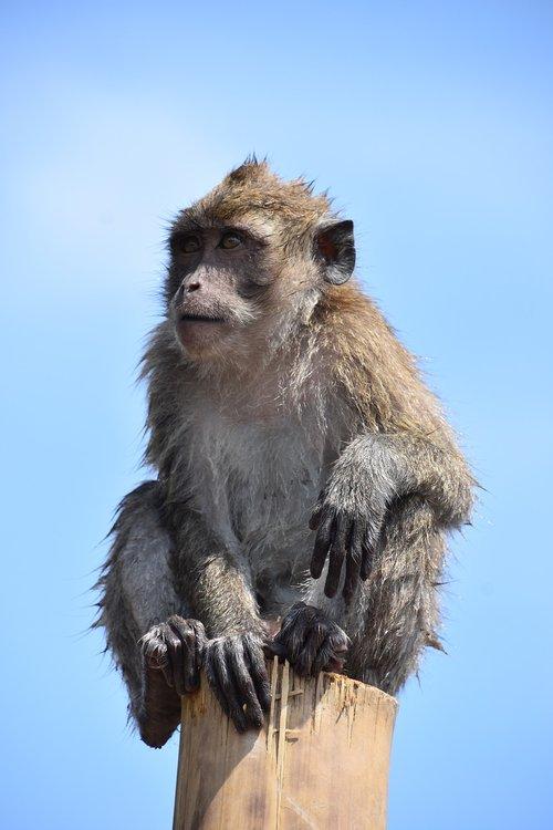 indonesia  monkey  nature