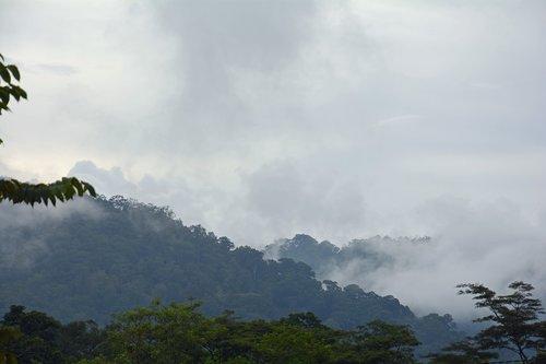 indonesia  sumatra  ketambe
