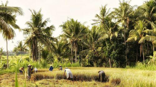 indonesia bali fieldwork