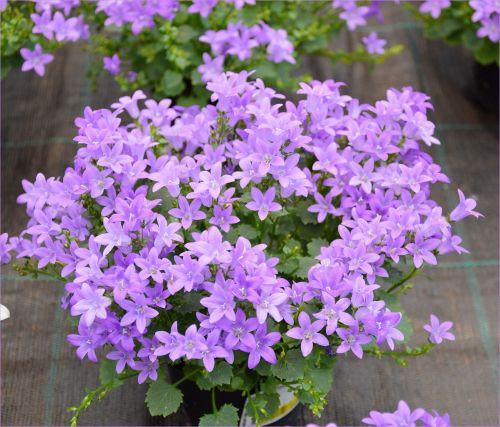 Indoor Flowers 09