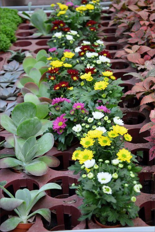 Indoor Flowers 15