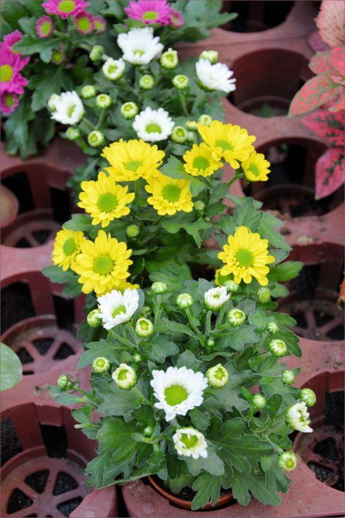 Indoor Flowers 16