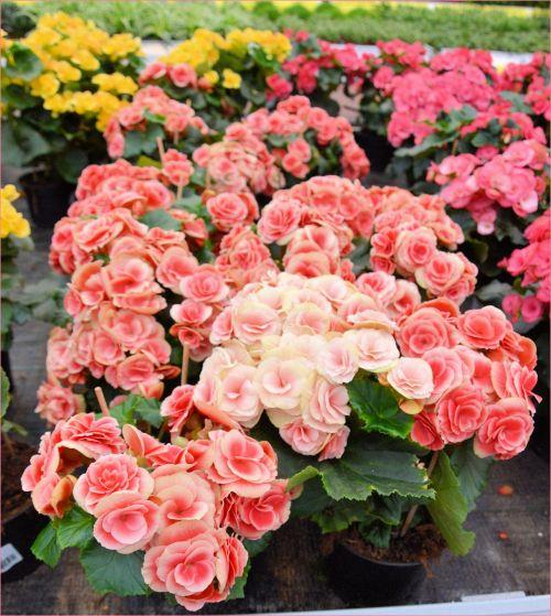 Indoor Flowers 2