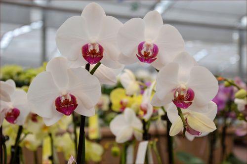 Indoor Flowers 23