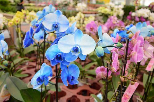 Indoor Flowers 24