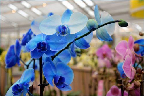 Indoor Flowers 25