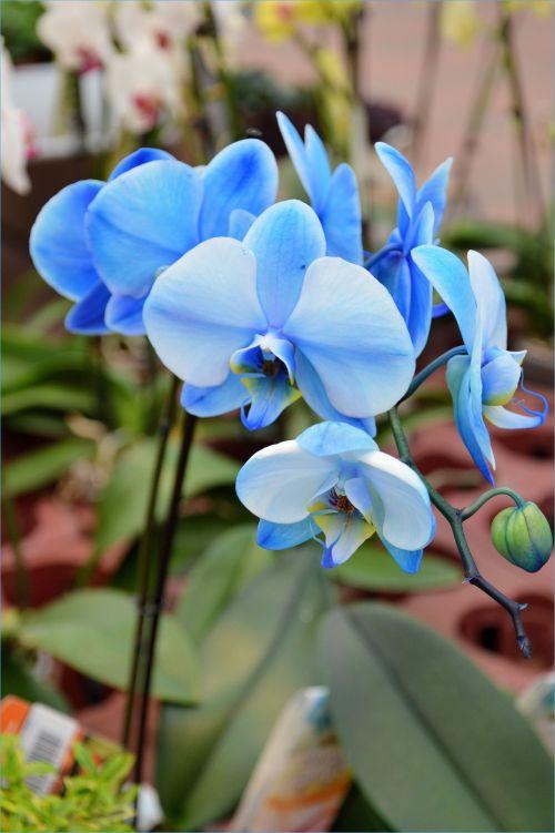 Indoor Flowers 26