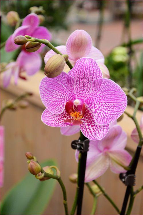 Indoor Flowers 27