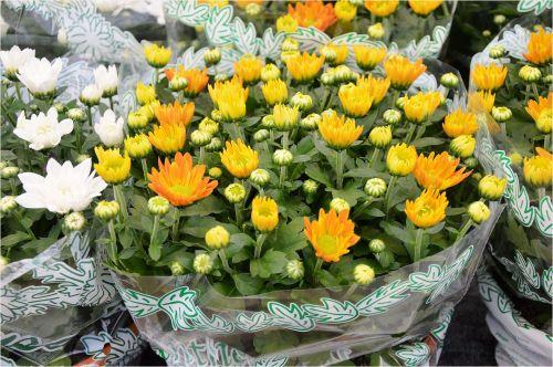 Indoor Flowers 7
