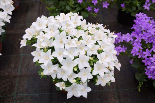Indoor Flowers 8