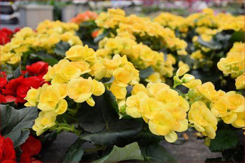 Indoor Flowers