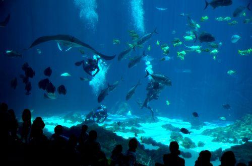 Indoor Saltwater Aquarium