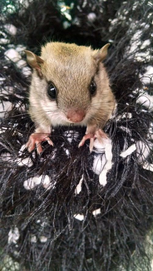 infant squirrel orphan