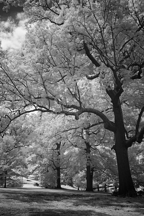 infrared black and white hills