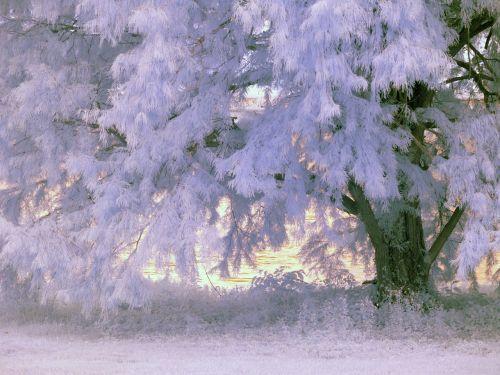 infrared tree foliage