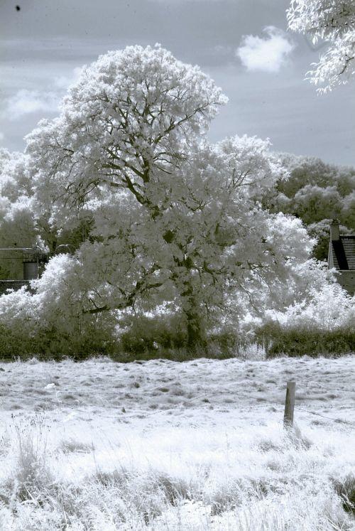 infrared tree landscape