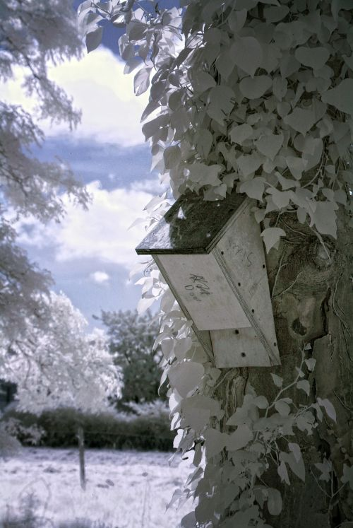 infrared tree nature