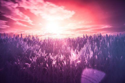 infrared field dream
