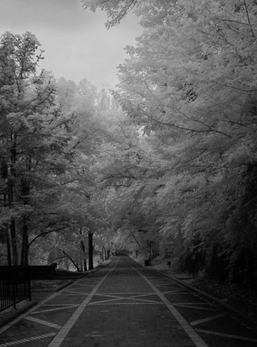 infrared black and white brick road