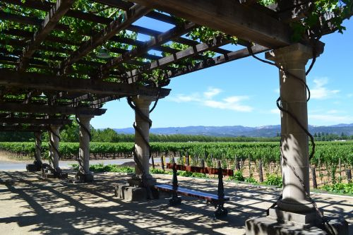 inglenook california vineyards
