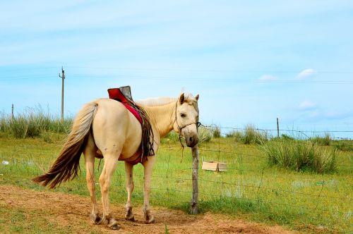 inner mongolia horse gol