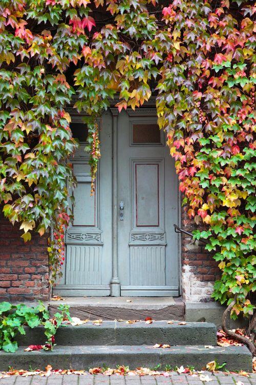 input door oak