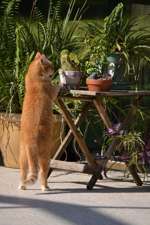 inquisitive cat cat standing on hind legs curious