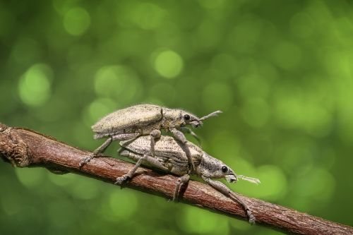 bug insect animal