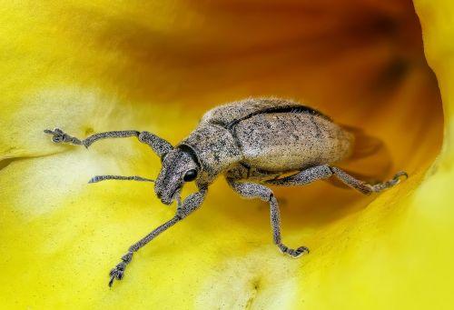 insect macro bug