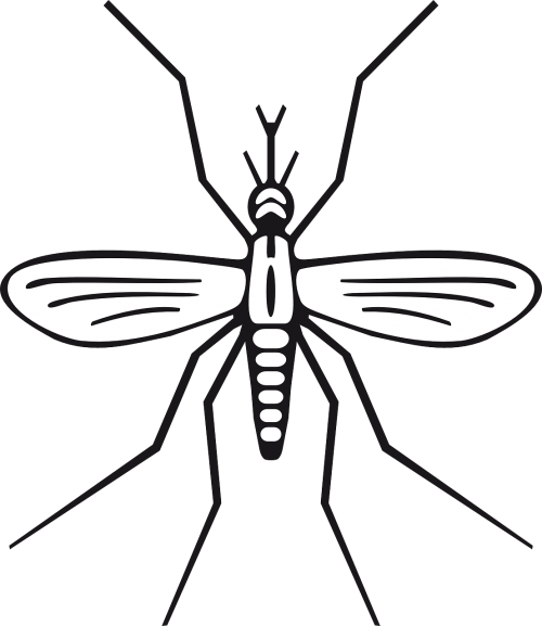 insect malaria mosquito