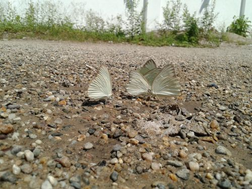 insect butterfly butterfly wings