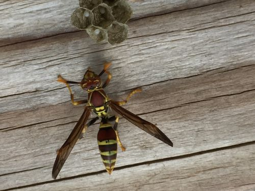 insect wasp nest