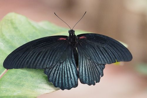 insect butterfly close
