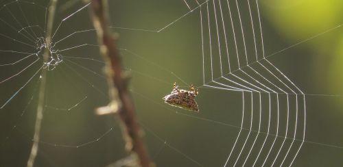 insect web arachnid