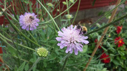 vabzdys,sodas,vasara,gėlė,gėlių,augalas,gamta,laukinė gamta,bičių,laukiniai