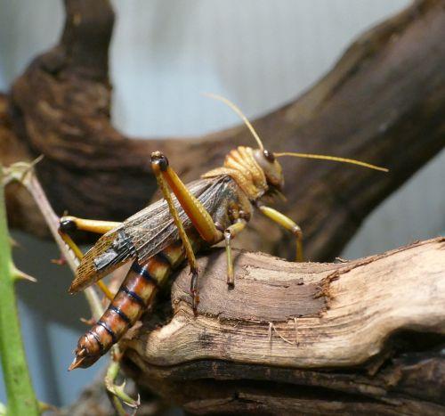 insect vermin wilhelma zoo stuttgart