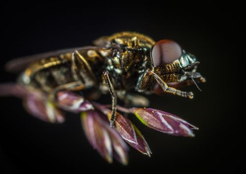 insect fly nature