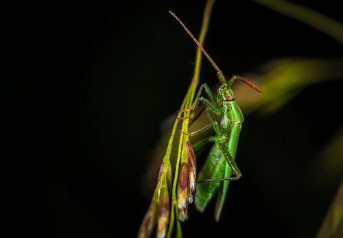 insect bespozvonochnoe macro