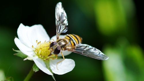 insect nature bee