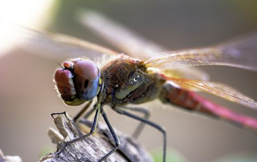insect animalia nature