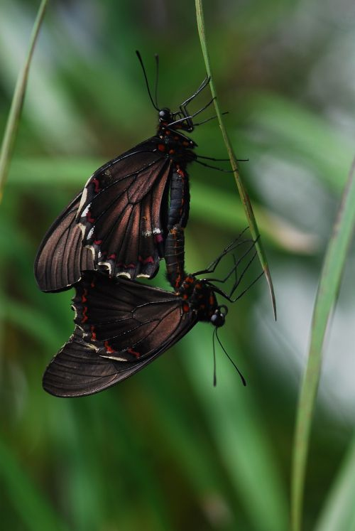 insect nature wing