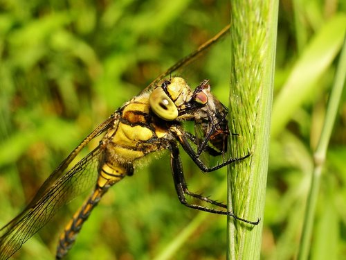 insect  nature  animals