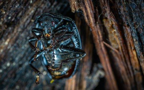 insect  bespozvonochnoe  nature