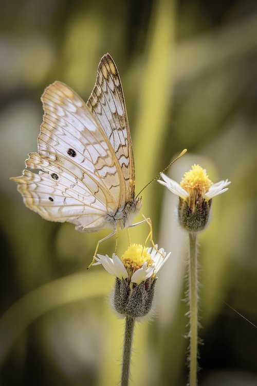 insect  nature  butterfly