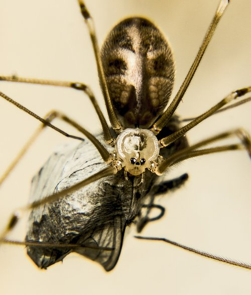 insect  invertebrate  magnification