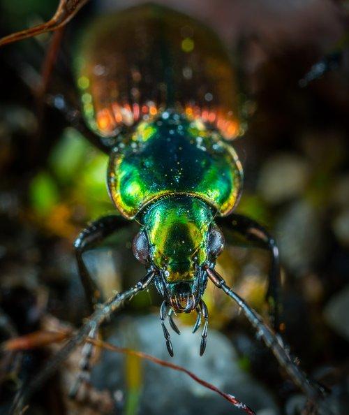 insect  bespozvonochnoe  beetle