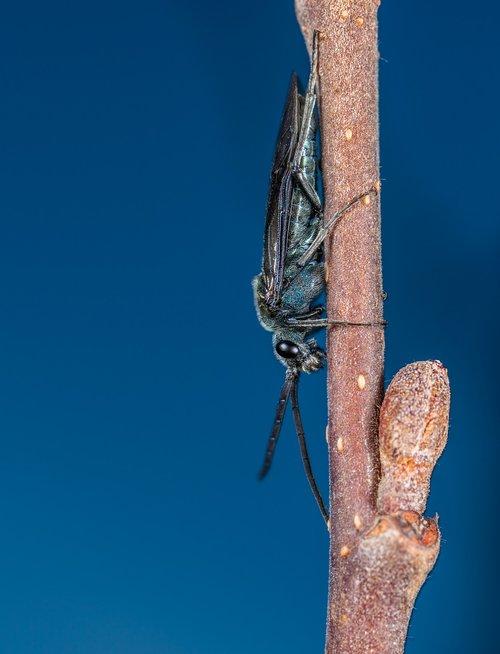 insect  no one  bespozvonochnoe