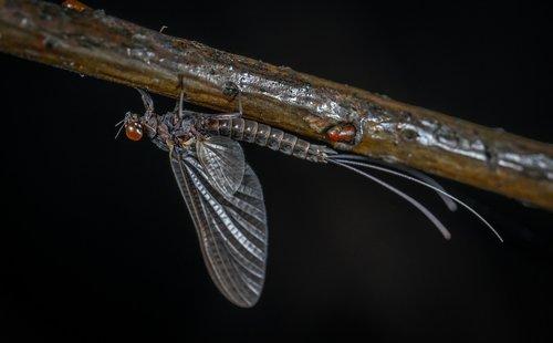 insect  bespozvonochnoe  no one