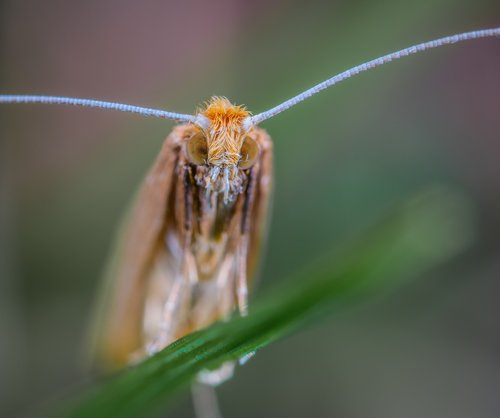 insect  macro  lepidoptera