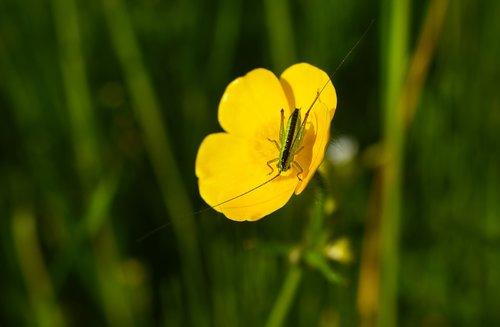 insect  animal  invertebrate
